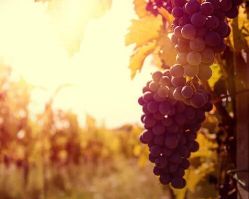 macedonische wijn bestellen danovino