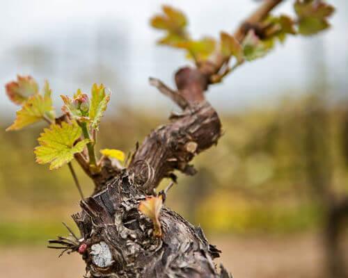 proeverij macedonische wijn