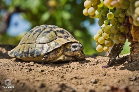 terroir-wijn