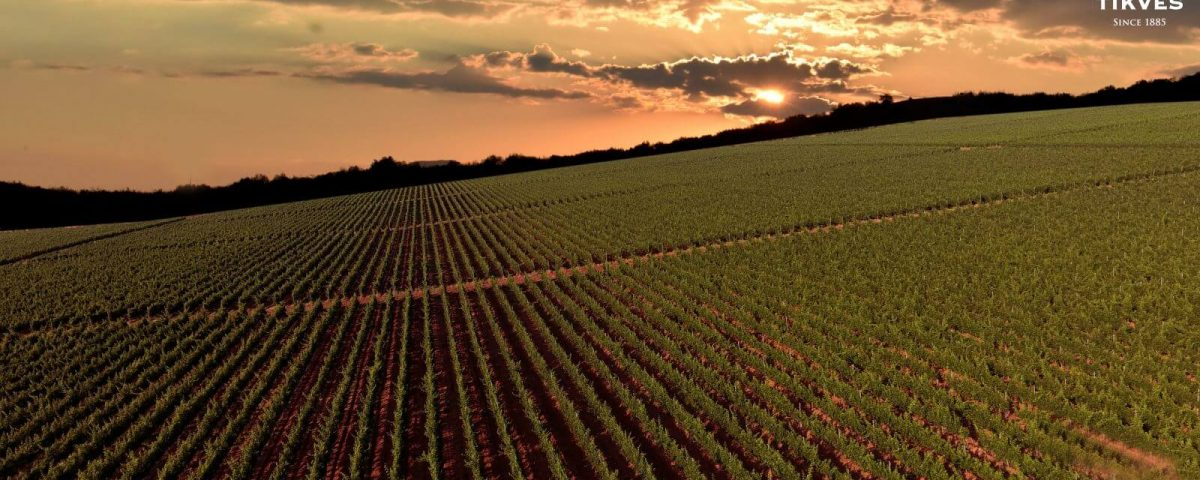 terroir-wijn-danovino